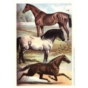 Johnson's Horse Breeds I Poster Print by Henry J. Johnson (10 x 13)