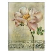 Floral Blush IV